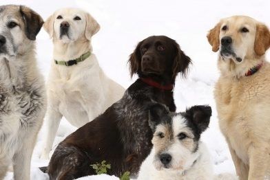 Helping Your Pets Stay Warm in Winter